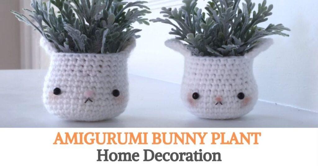 Bunny Plant