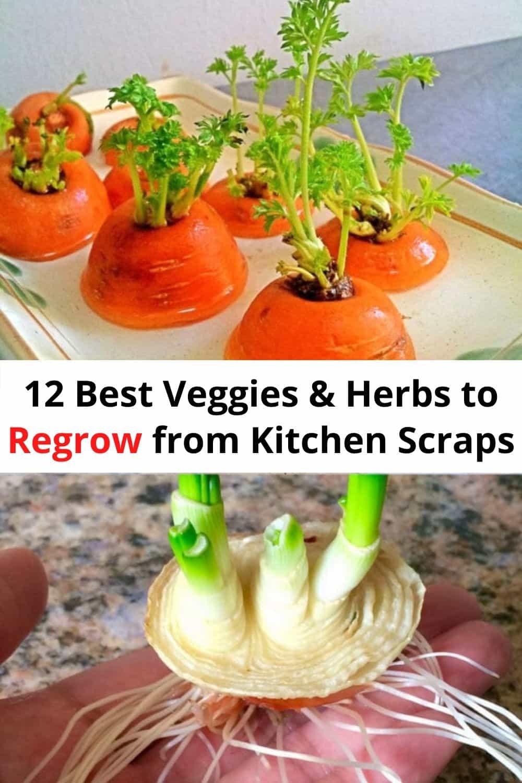 12 Best Veggies Herbs to Regrow from Kitchen Scraps