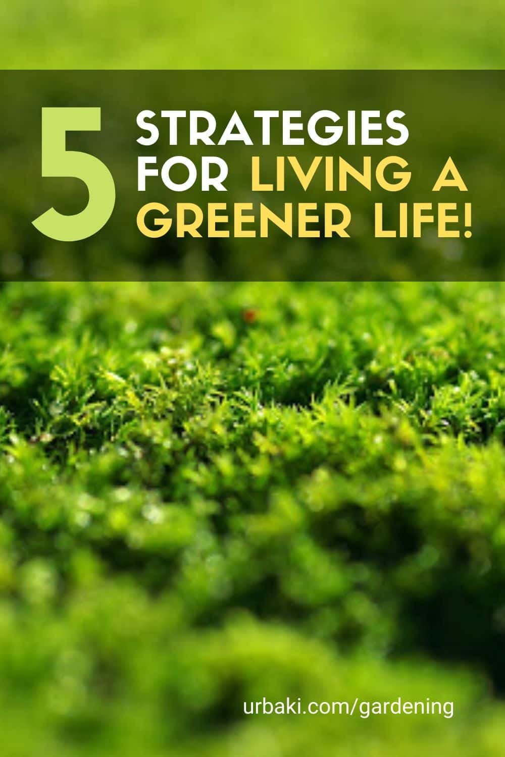 5 Strategies for Living a GREENER LIFE!