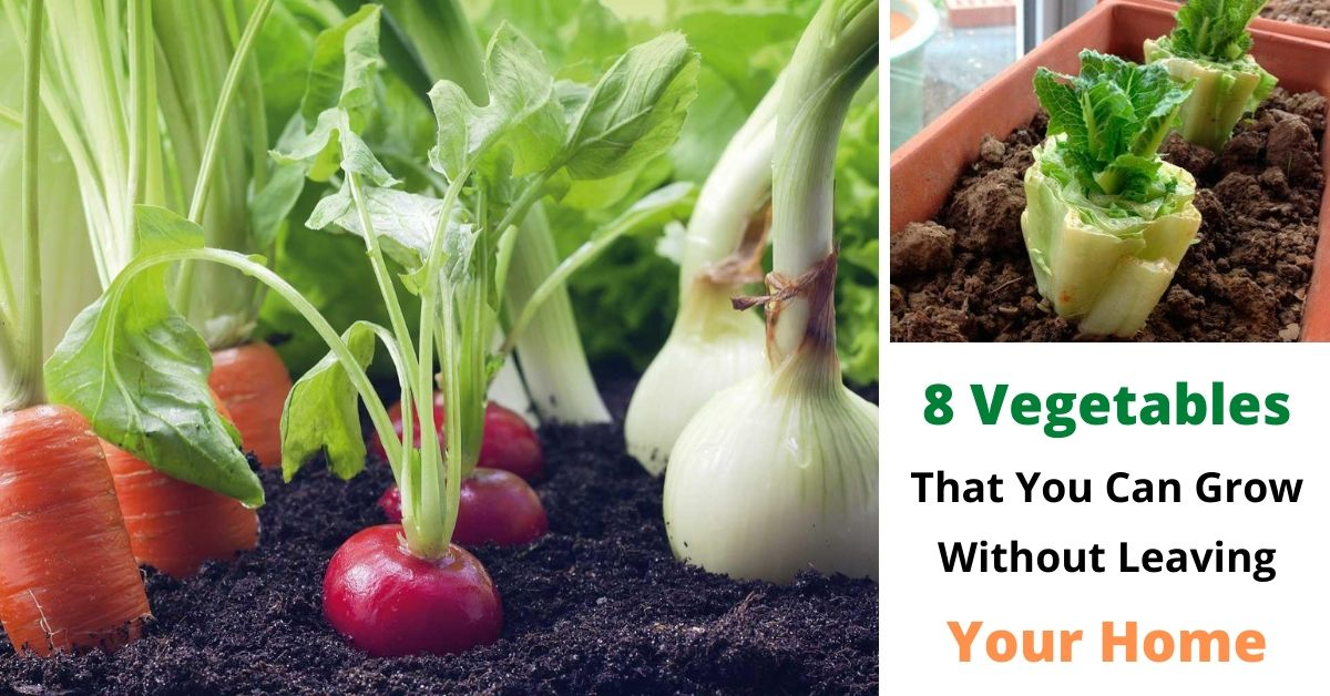 8 Vegetables That You Can Grow Without Leaving Your Home