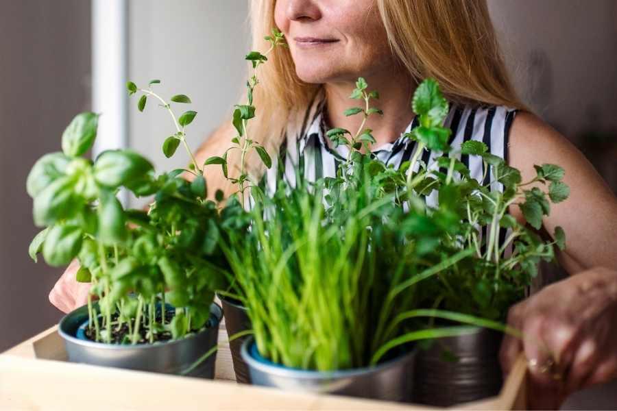 Top 5 Beginner Tips For Apartment Gardeners