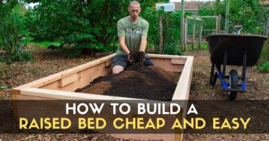How to Build a Raised Bed CHEAP and EASY