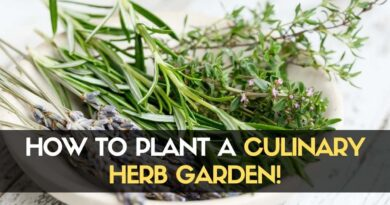 How to Plant a Culinary Herb Garden