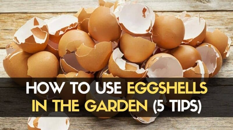 How to Use Eggshells in the Garden 5 Tips