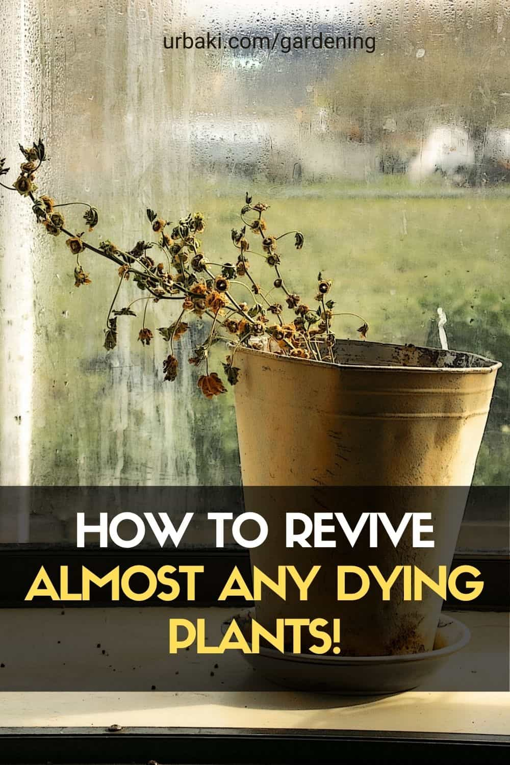 How To Revive Almost Any Dying Plants