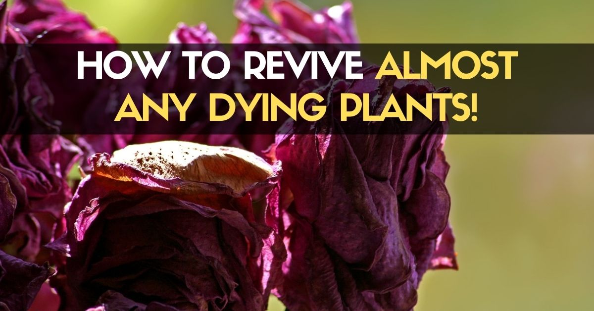 How To Revive Almost Any Dying Plants!