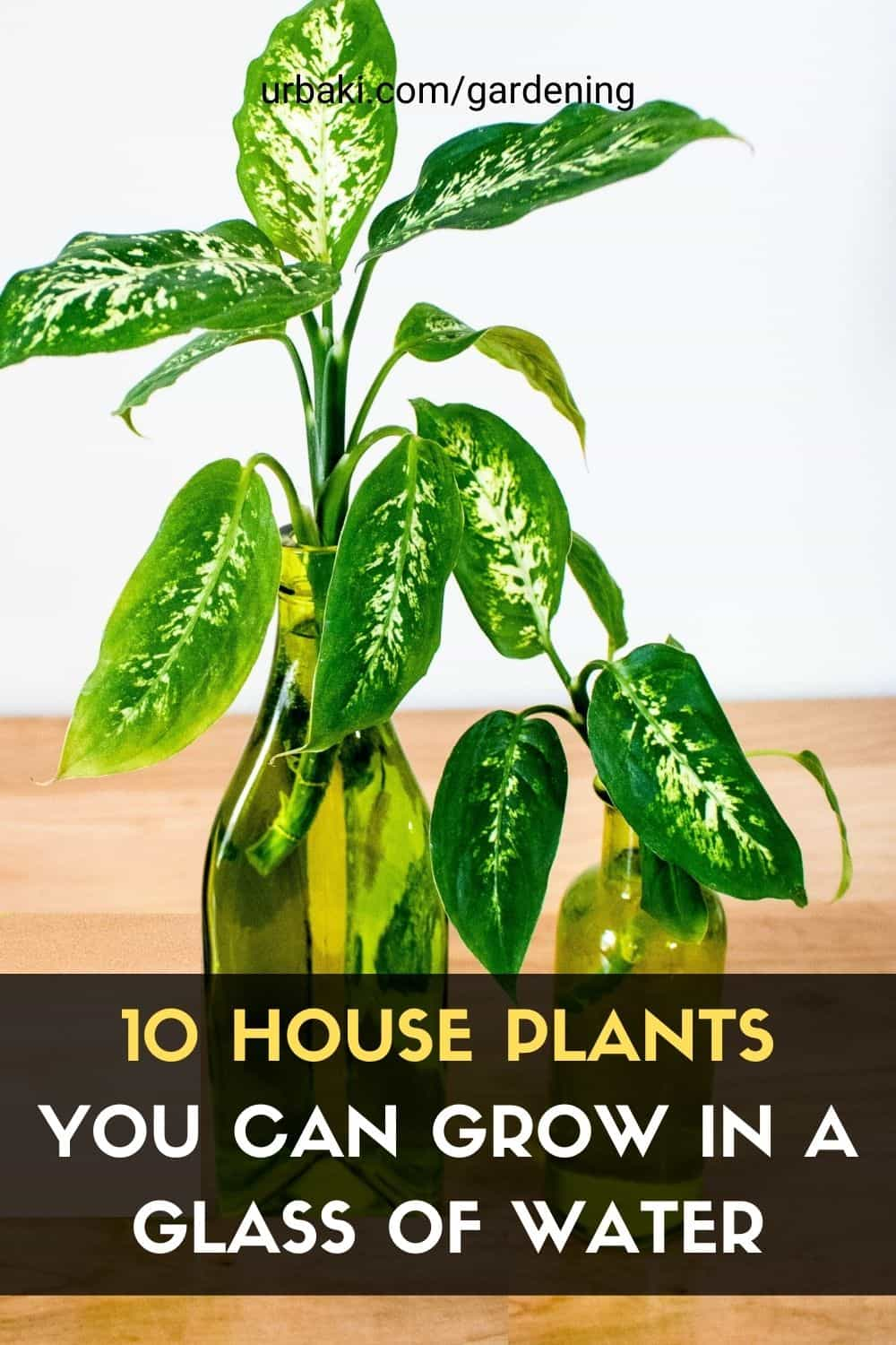 House Plants You Can Grow in a Glass of Water