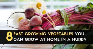 8 Fast Growing Vegetables