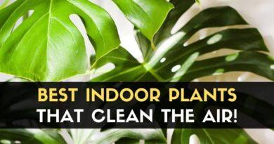 Plants That Clean The Air
