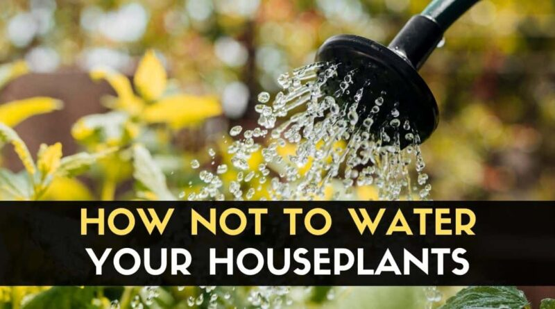 NOT to Water Your Houseplants