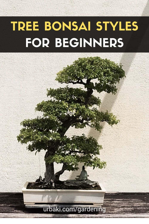 Tree Bonsai Style