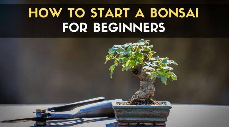 Start a Bonsai