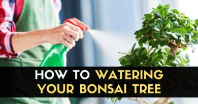 Watering Your Bonsai