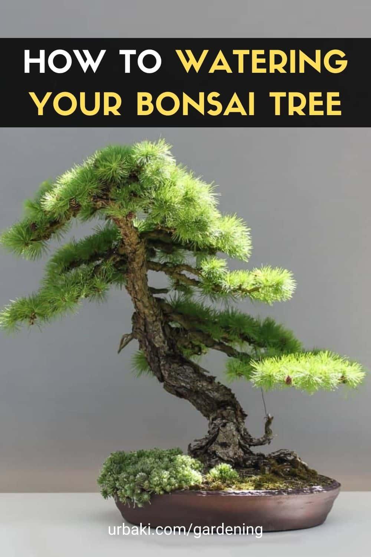 Watering Your Bonsai