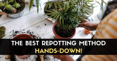 Repotting Method