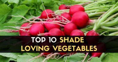 Shade Loving Vegetables