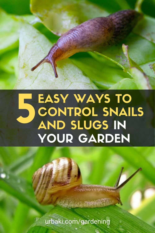 Snails and Slugs