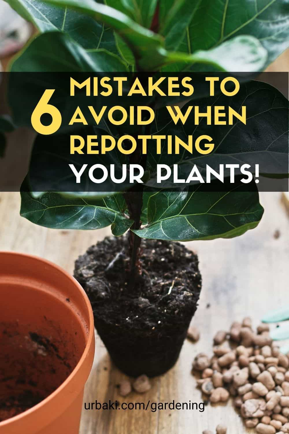 mistakes repotting