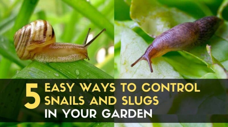 Control Snails and Slugs