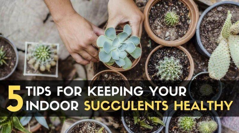 Succulents Healthy