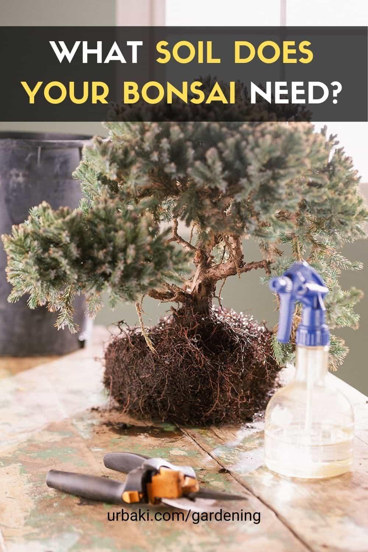 soil bonsai