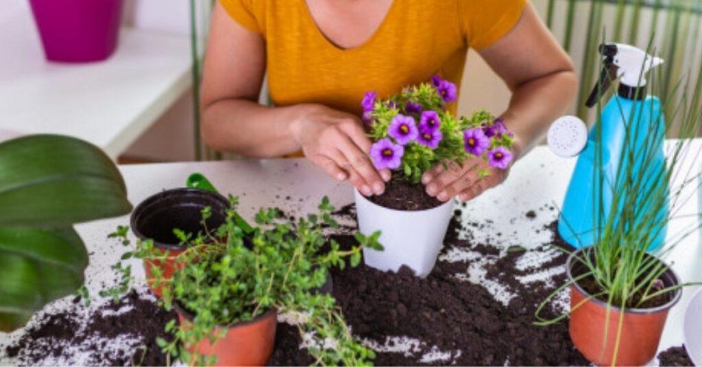 Fertilizer for Plants at Home