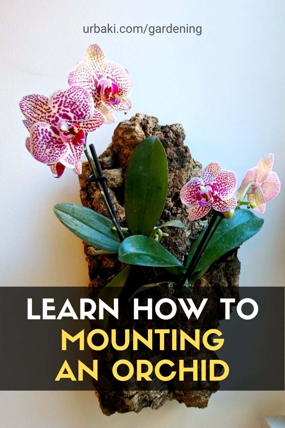 Mounting an Orchid