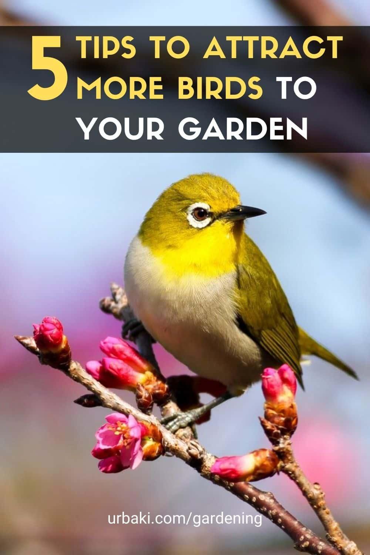 Attract More Birds