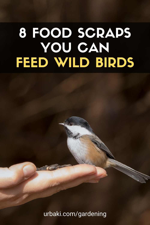 food scraps for birds