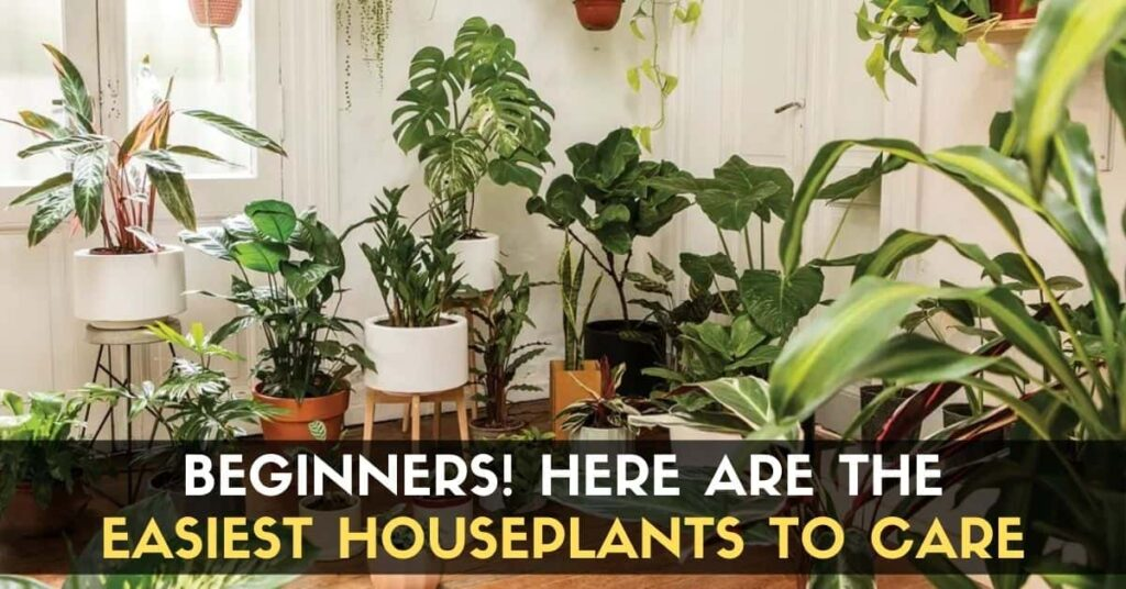 Easiest Houseplants to Care