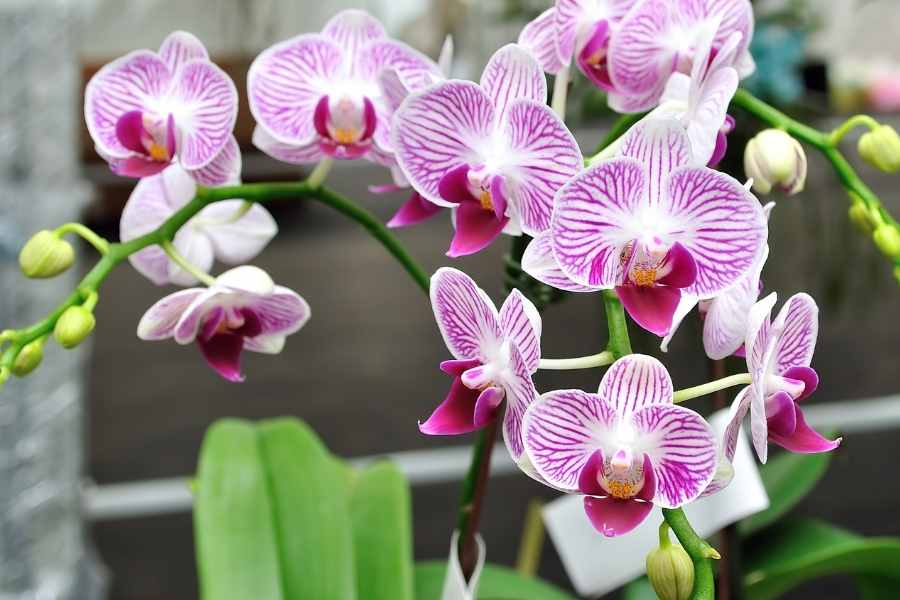 Things That Orchids Hate