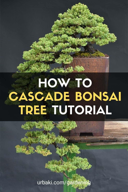Cascade Bonsai tree