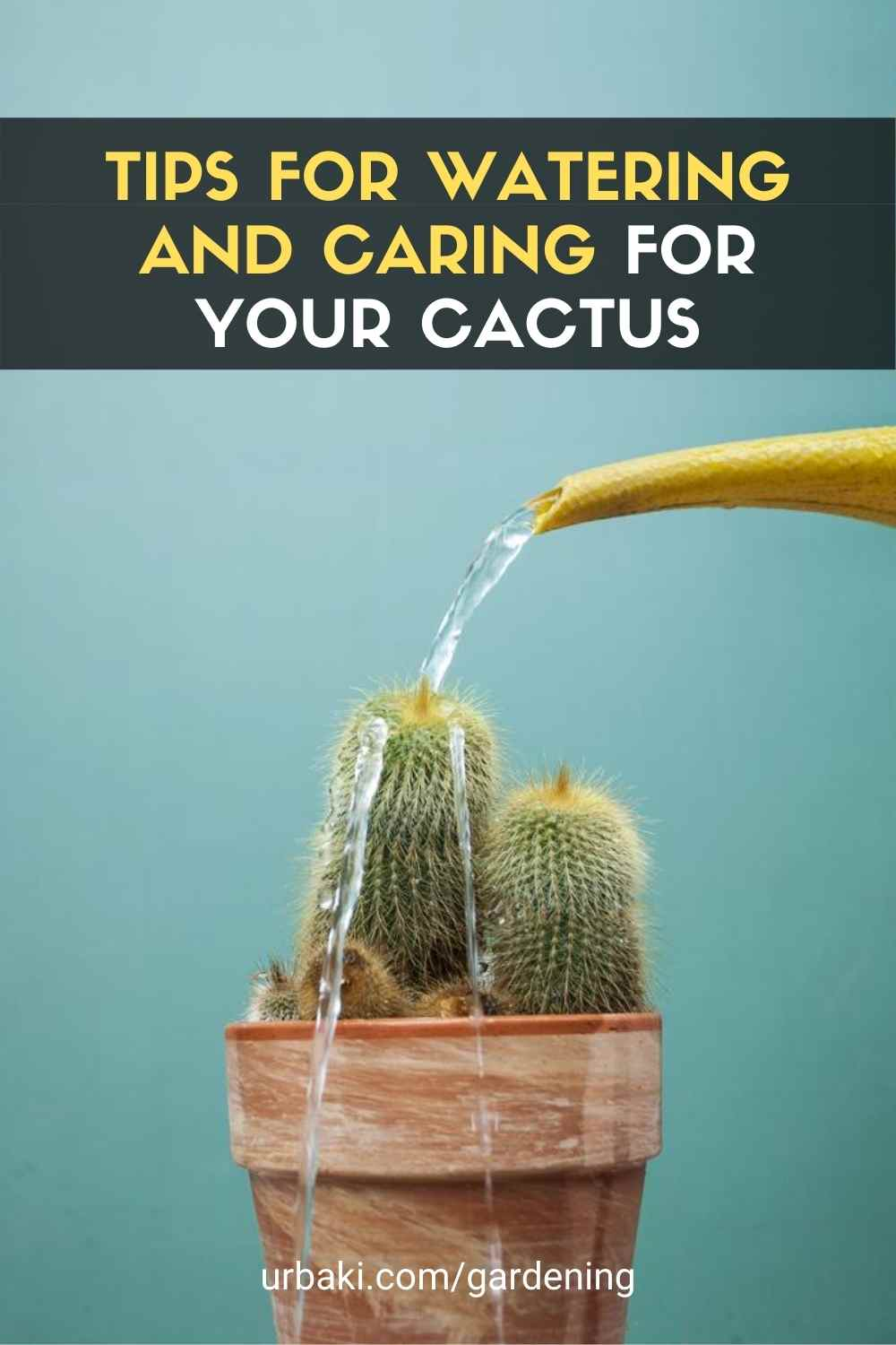 Watering and Caring for Cactus