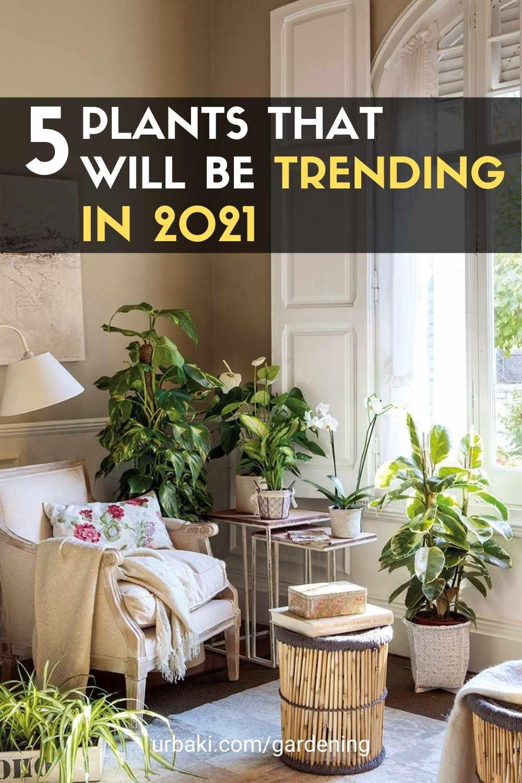 Plant Trending in 2021