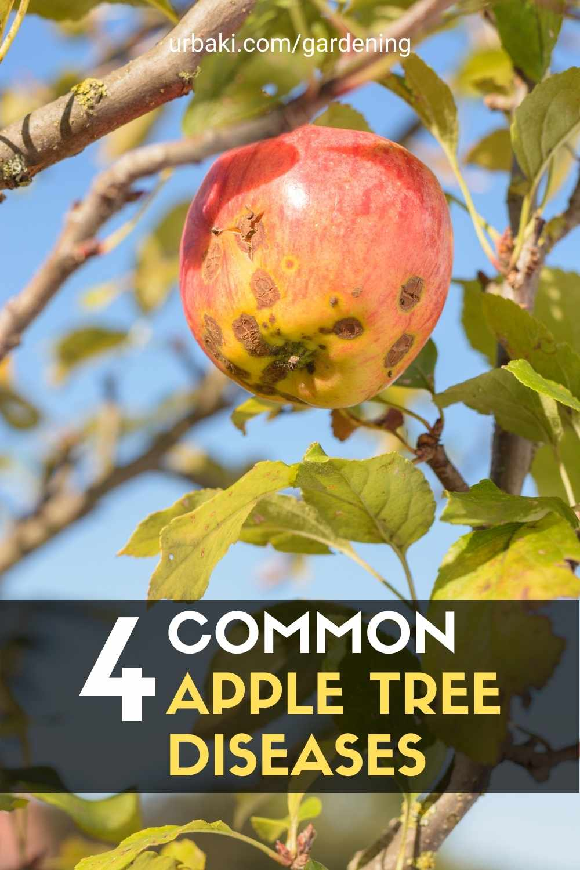 Apple Tree Diseases