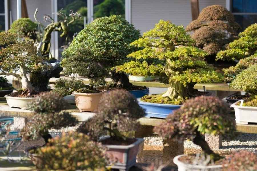 Trees that Make Good Bonsai Specimens