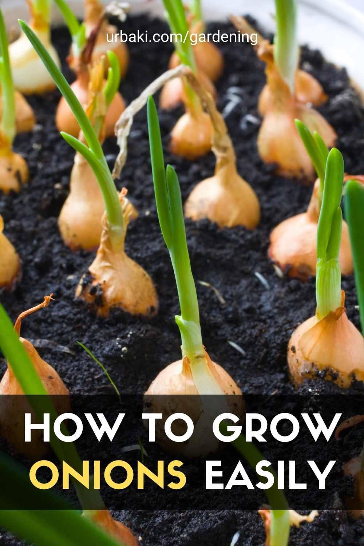 Grow Onions
