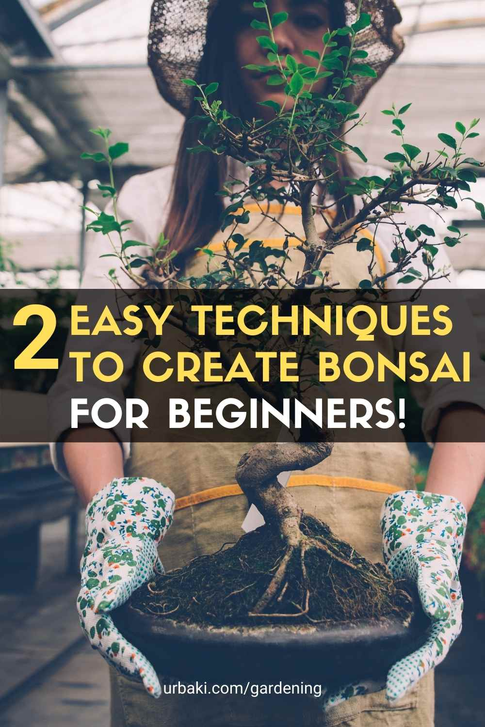 EASY Techniques to Create Bonsai