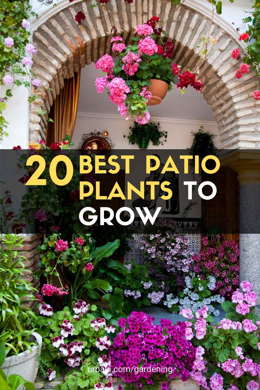 Patio Plants to Grow