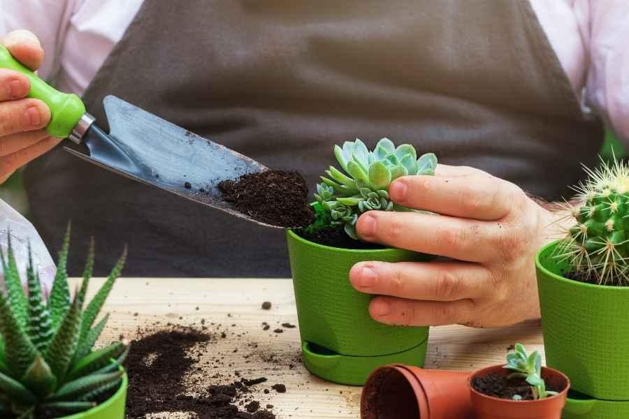 Repot Your Succulents
