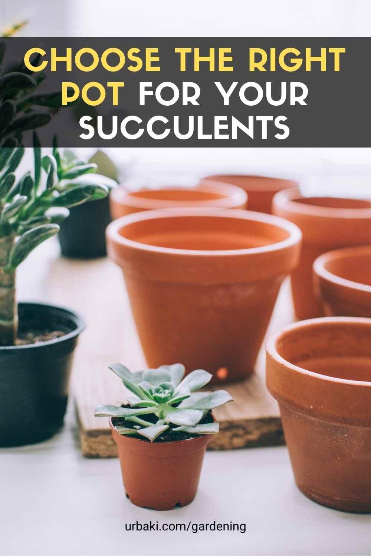 Pot For Succulents
