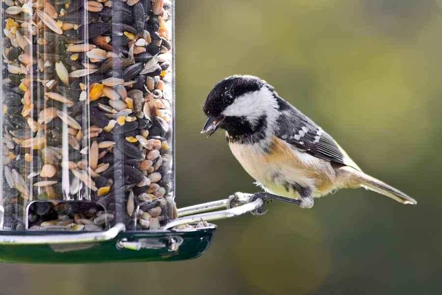 Bird Feeding Myths