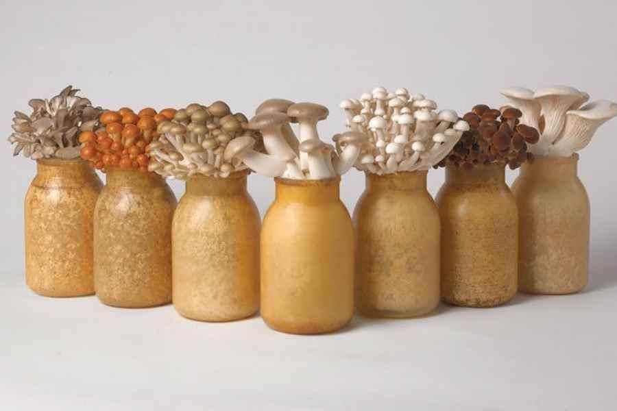 Grow Mushrooms in Bottles