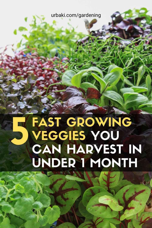 5 Fast Growing Veggies