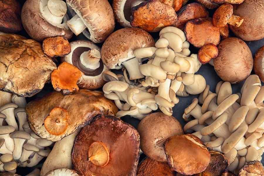 Small Scale Mushroom Farmer
