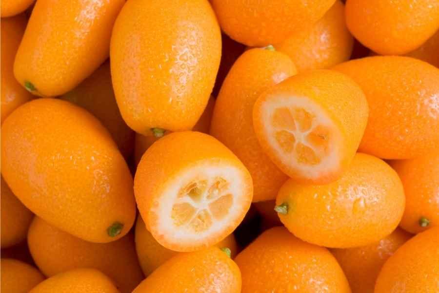 Kumquat Trees in Containers