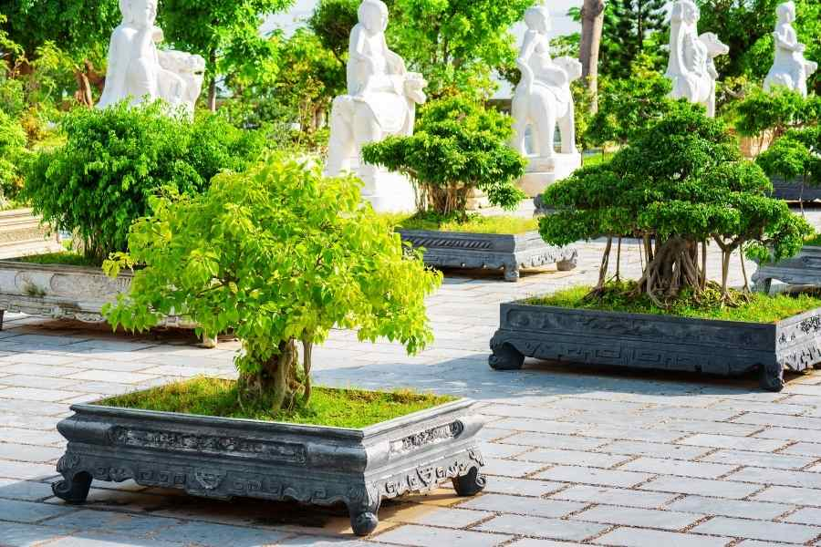 Clump Style Bonsai