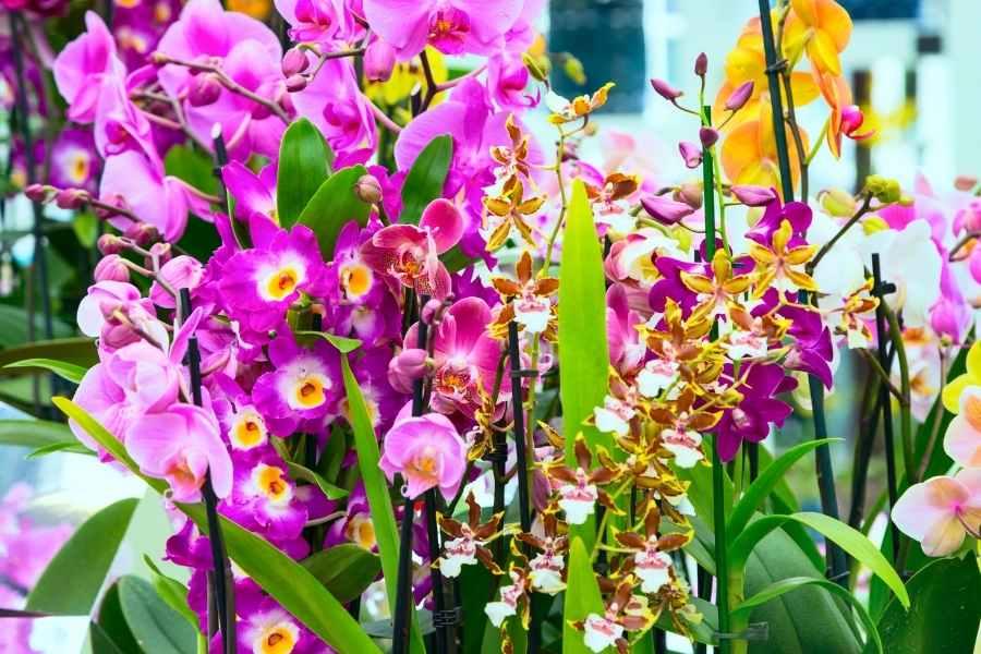 6 Best Orchids