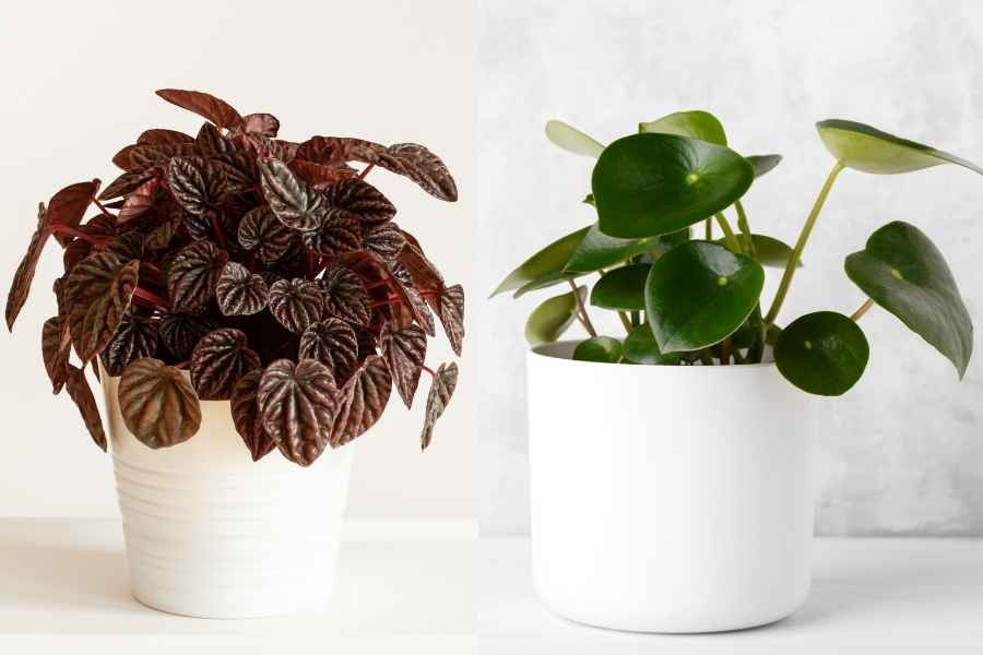 Tiny Houseplants