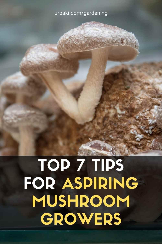 Aspiring Mushroom Growers